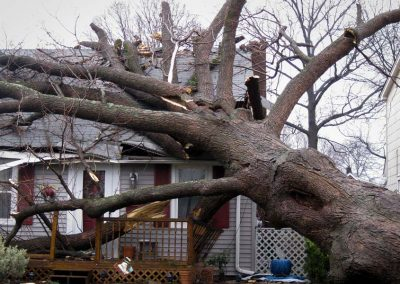 Tree Laying on House