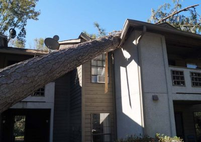 Tree Laying on Apartment Roof